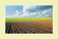 Newry Solicitors - Tiernans Solicitors | Solicitors Northern Ireland | Agricultural